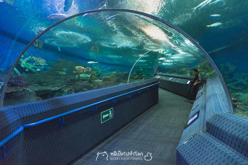 รีวิว, สถานที่ท่องเที่ยว, พัทยา, ชลบุรี, underwater world