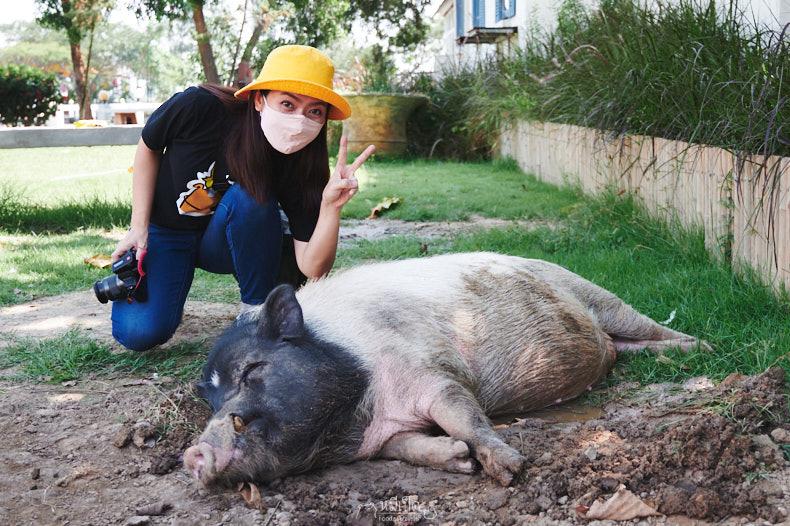 รีวิว มินิมูร่าห์ฟาร์ม (Mini Murrah Farm) ฉะเชิงเทรา เที่ยวฟรีไม่มีค่าเข้า เล่นกับควาย ลูบพุงหมู จับหูกระต่าย